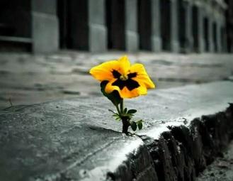 caos-e-flor-resiliente
